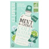 Clipper Organic mint and citrus infusion tea cold water